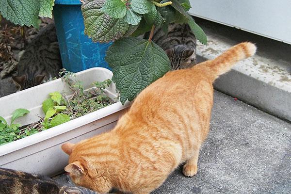 トトの向こう側 仔猫2