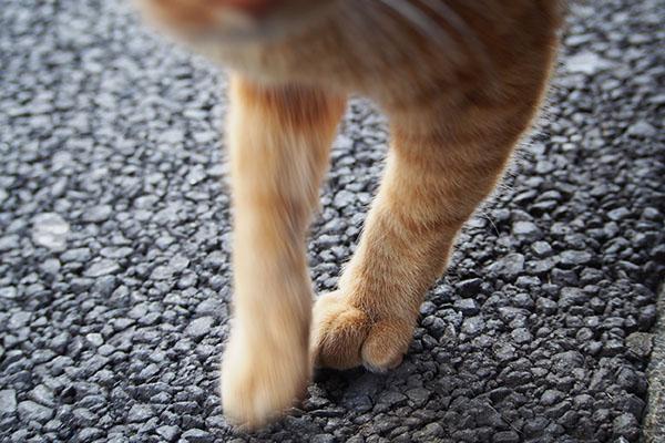 エアフミフミ 細い足のカブ
