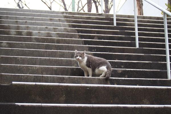 ダル太 階段の途中