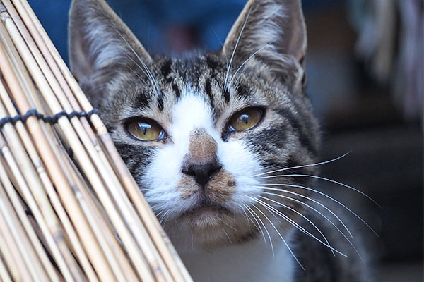 ホット 仔猫らしからぬ表情