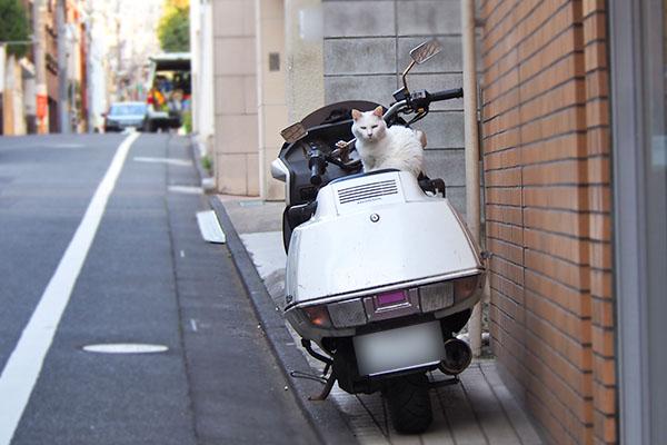 路肩に止めたバイクに白猫さん