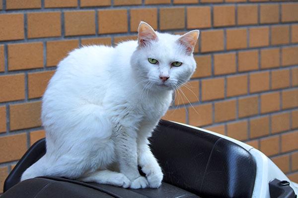 白猫さん 何か要求でもあるのか