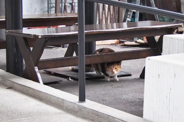 ベンチの下 ミク