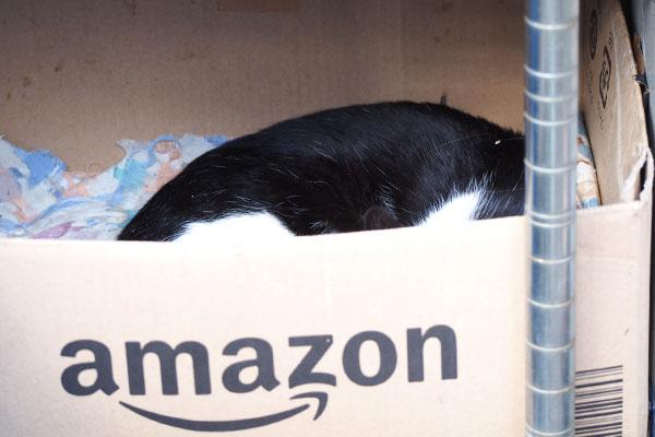 チョモがアマゾンボックスで寝ている