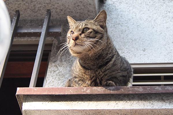 シマヲ 窓から出て来た