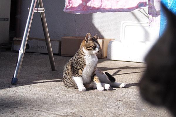 横になる ホット 手前猫顔