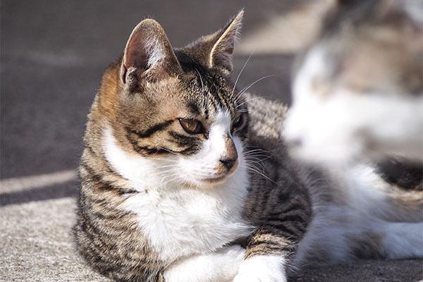 ズームしても 手前に猫顔