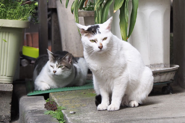 イカ耳オーロラと母ケイ