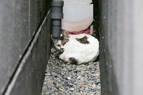 gap cat