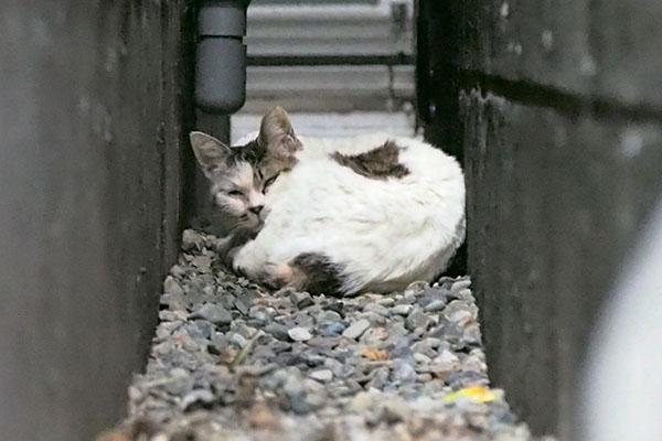 gap cat 3