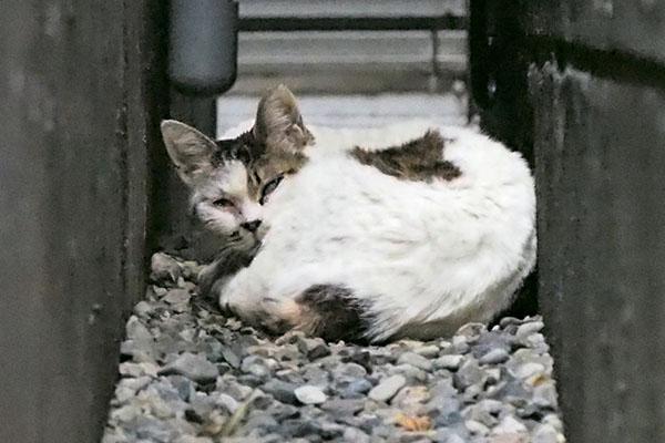 gap cat 4