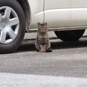 prima sitting in front of car