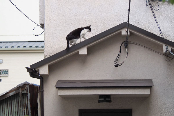 ニコル 軽々と屋根に