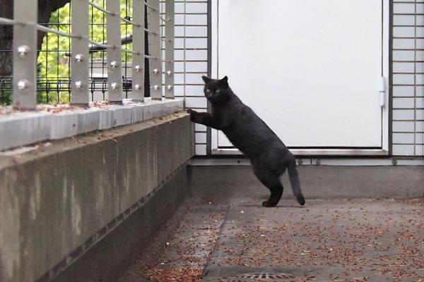 キト 立ってる こっち見る