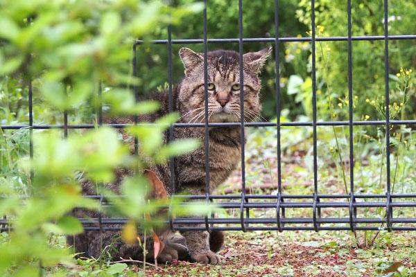 roki beyond the fence