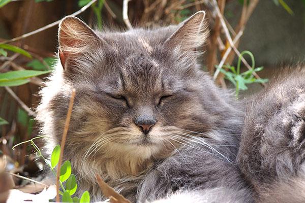 mafu sleepy face