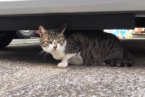 sakura under the car