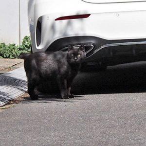 kuron behind the car