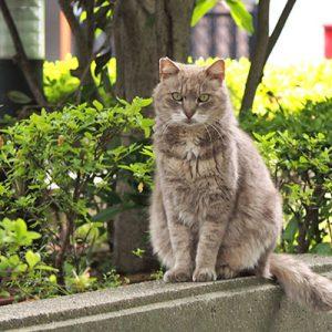 guri sitting and stare