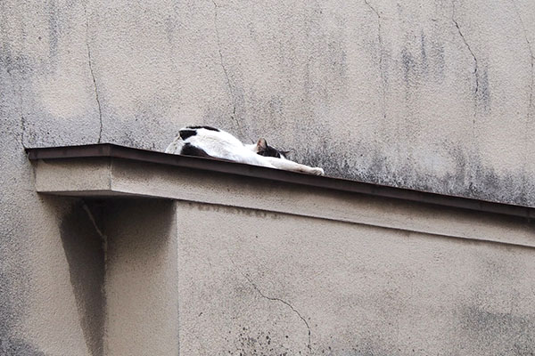 坊 庇の上でお昼寝