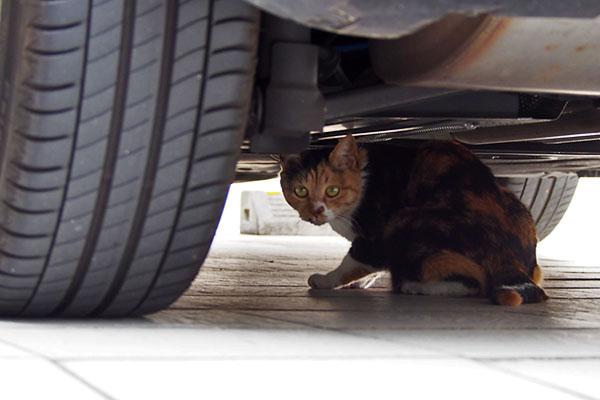 miku hyde under the car