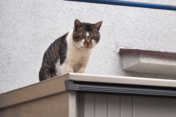 ombre watching kochan