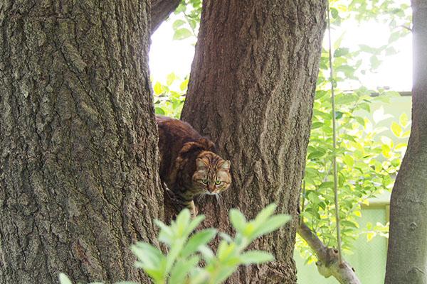 クラタン 木の上