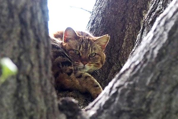 kuratan on the tree