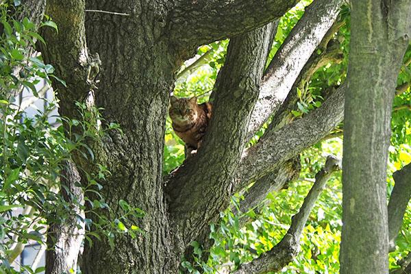 クラタン 木の股でくつろぐ 4