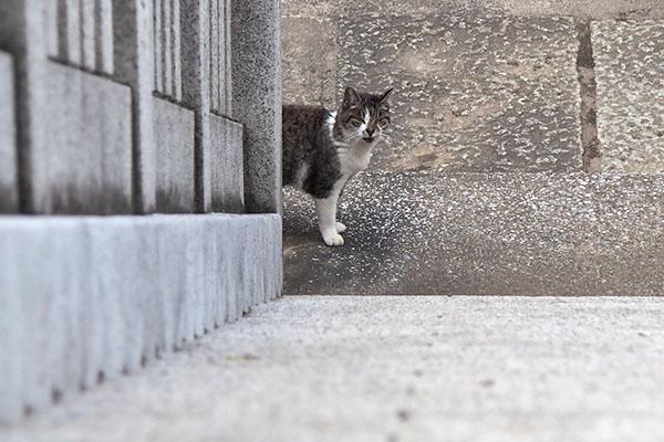 雫 上から 階段下で待つ