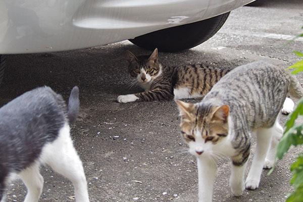 3cats at soraplace