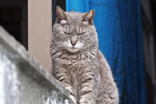 cipi grumpy face