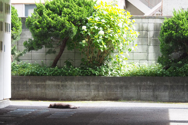 napping guri in front of hydrasia