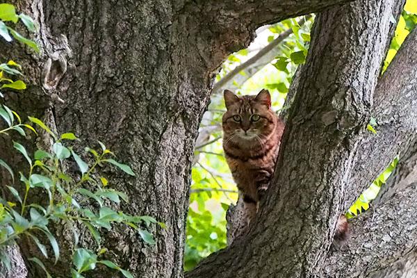 クラタン 木の間から見る