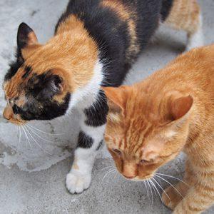 cub and riko heads