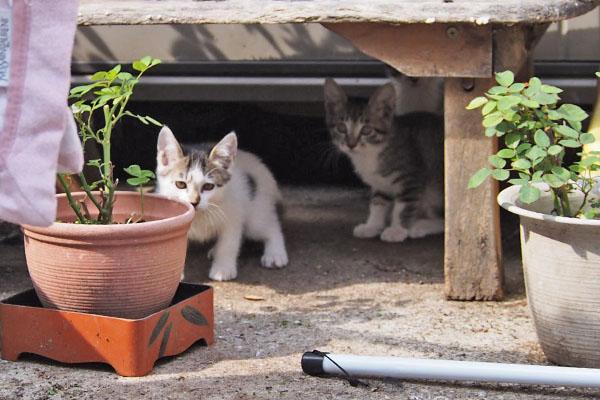 棚の下に仔猫2