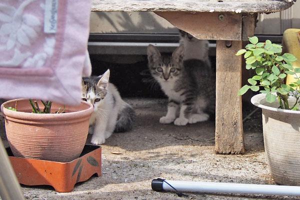 棚の下に仔猫2 奥のコ