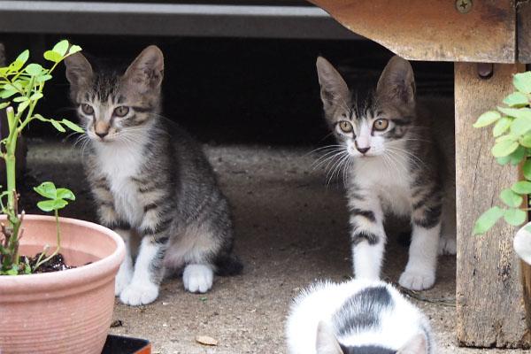 仔猫 背後のそっくり兄弟