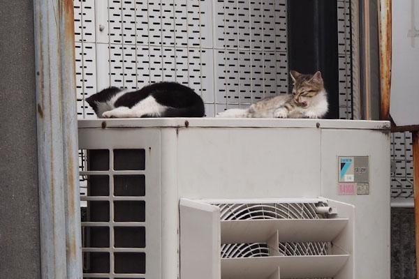 仔猫発見 2匹