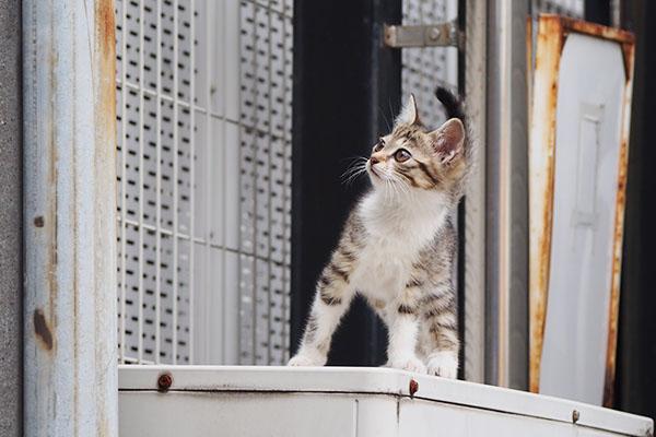 仔猫 覗き見る