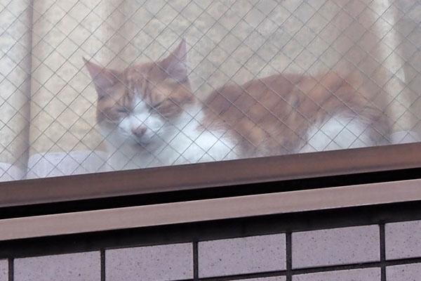 家猫茶白 渋い顔する