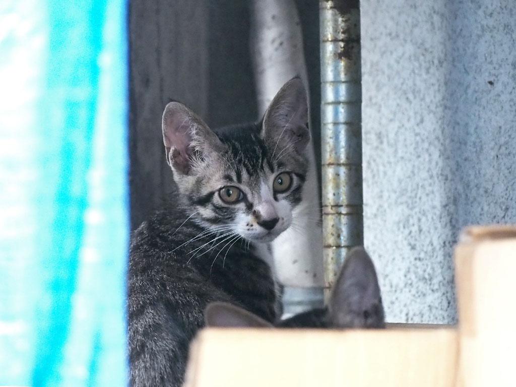 さくらが生んだ仔猫手前にも猫耳