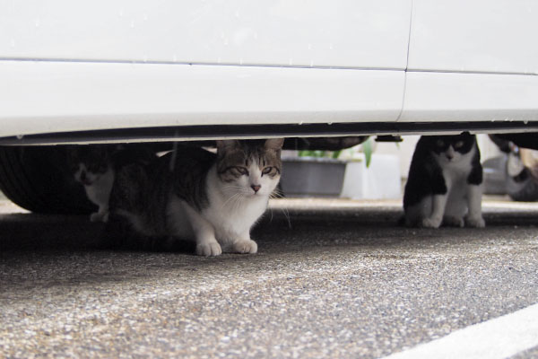 コルビ 別の車の下