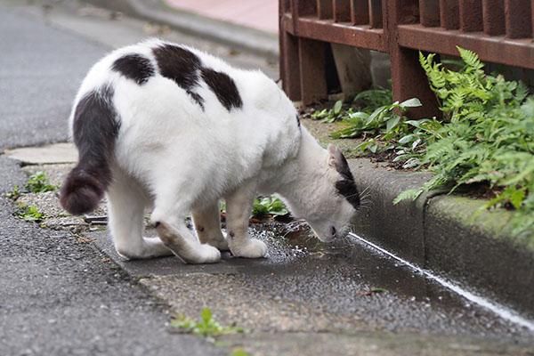 坊 雨水を飲む