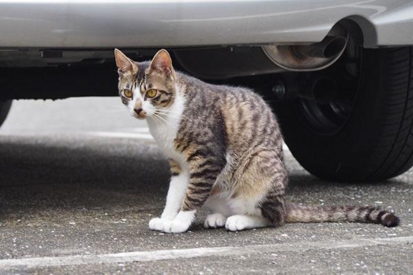 猫背なホット
