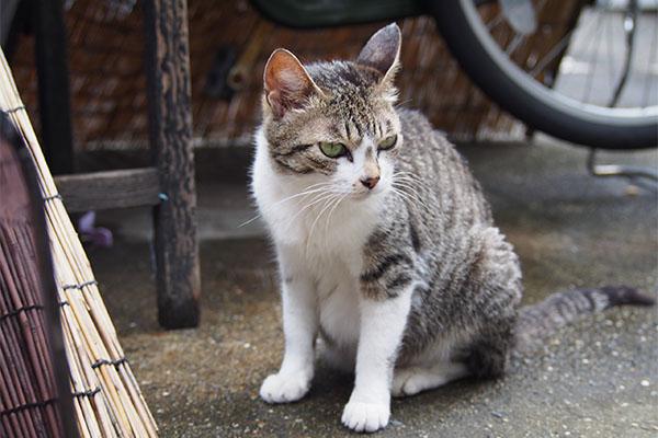 sakura sitting