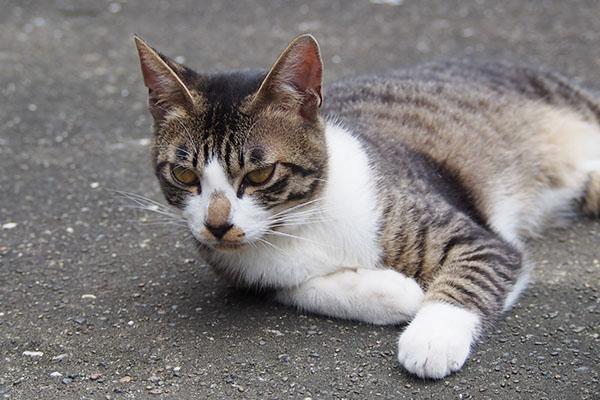 兄猫 ホット君もビックリ