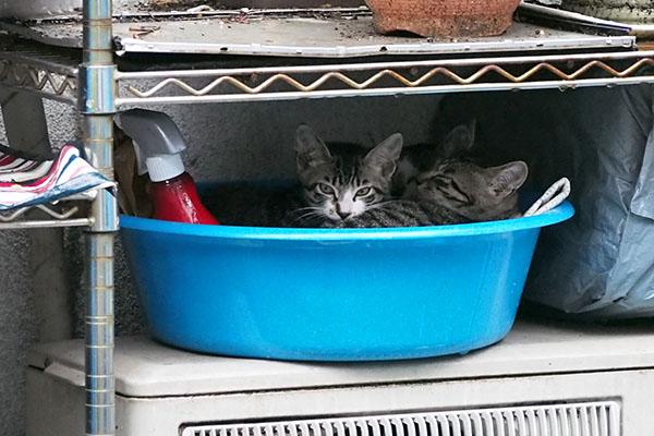3兄弟で洗面器にイン
