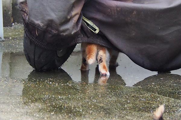茶白仔猫 足の裏2