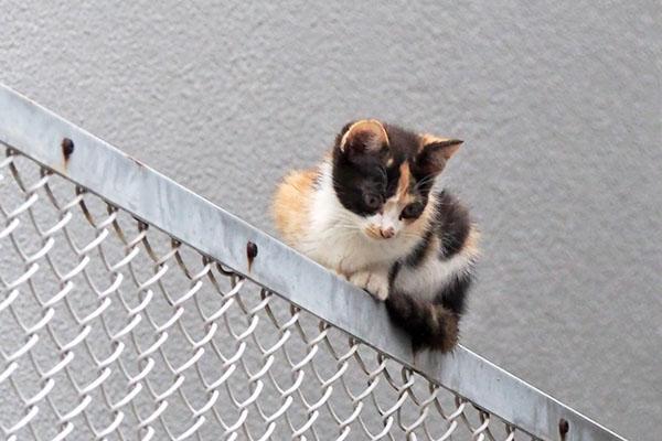 三毛仔猫 ずっと見てる